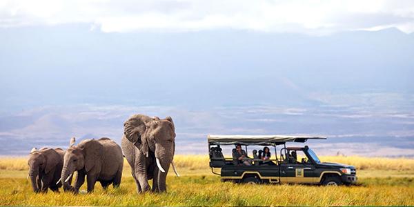 Jungle Safari_Africa tour